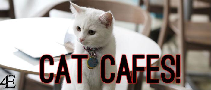 catcafes