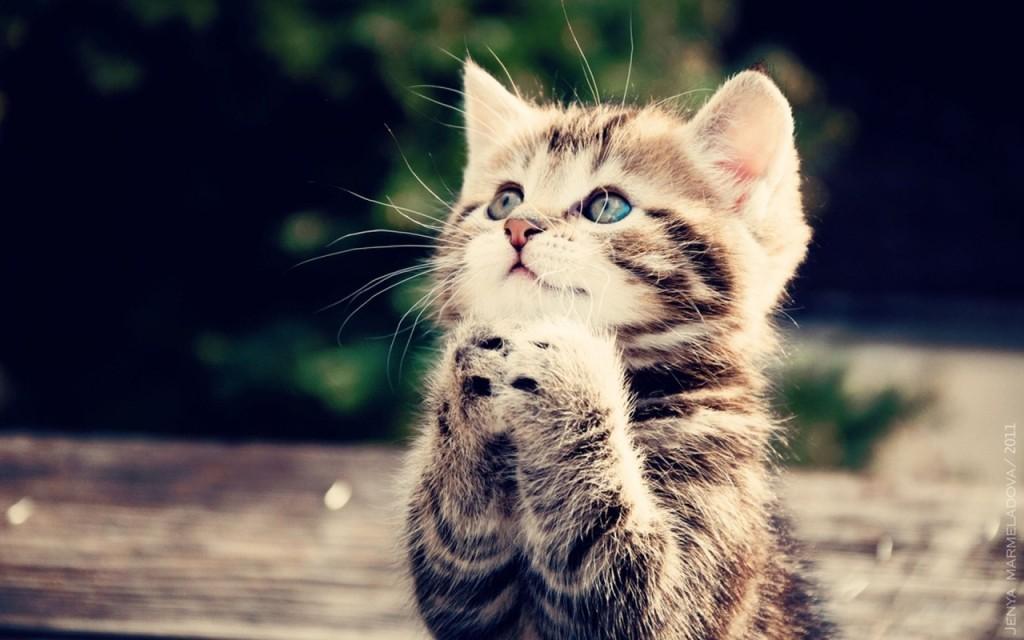 tumblr_static_cute-cats-cats-33440930-1280-800