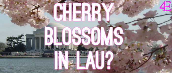 cherryblossomslau