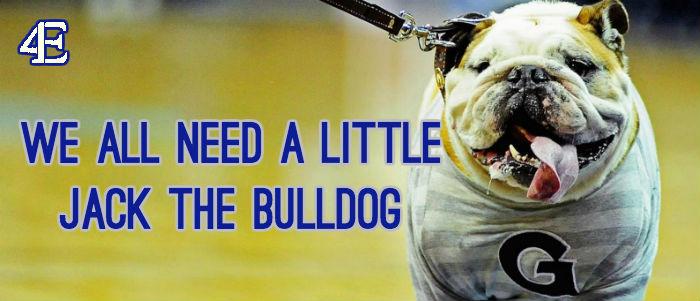 Jack the bulldog